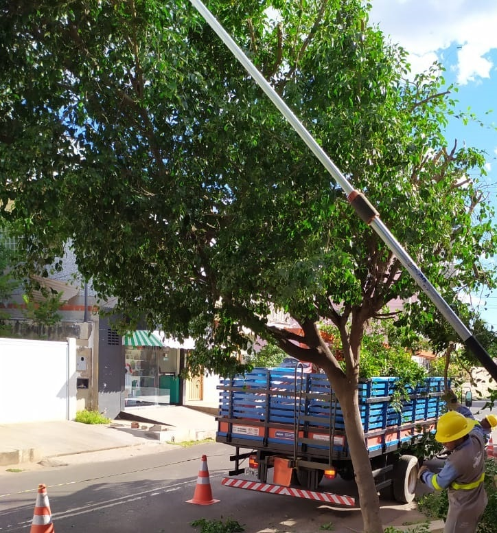 Poda de Árvores: prevenção e cuidados com energia elétrica