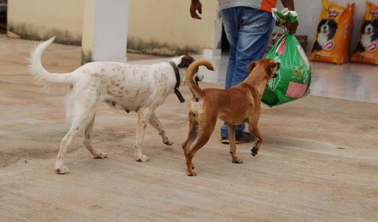 APAPI pede ajuda para comprar ração para os animais
