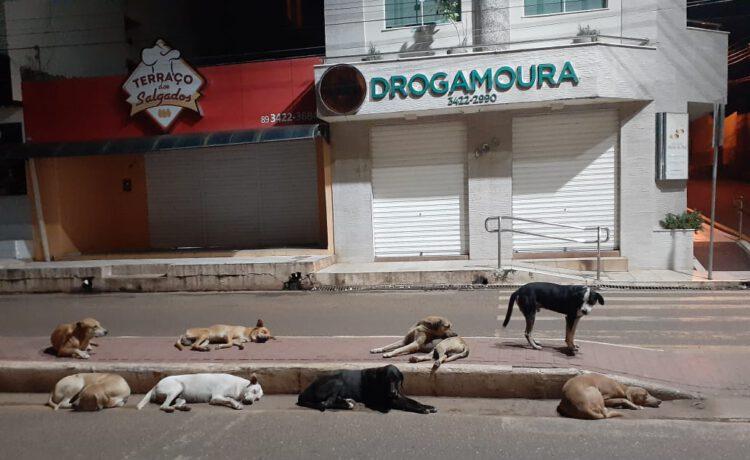 Castração dos animais de rua terá início no bairro Paraibinha, em Picos