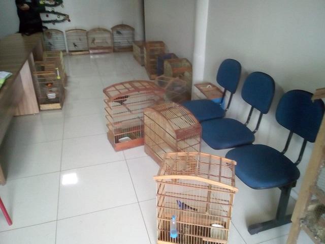 Aves silvestres são apreendidas em marcenaria em Picos