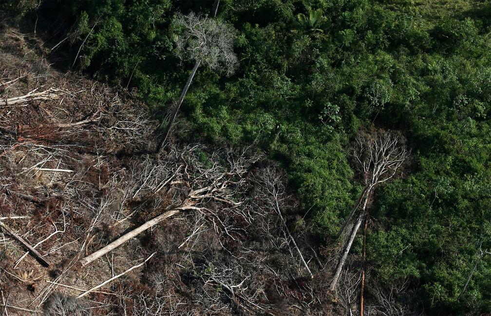 Amazônia bate novo recorde nos alertas de desmatamento em junho; sinais de devastação atingem mais de 3 mil km² no semestre, aumento de 25%