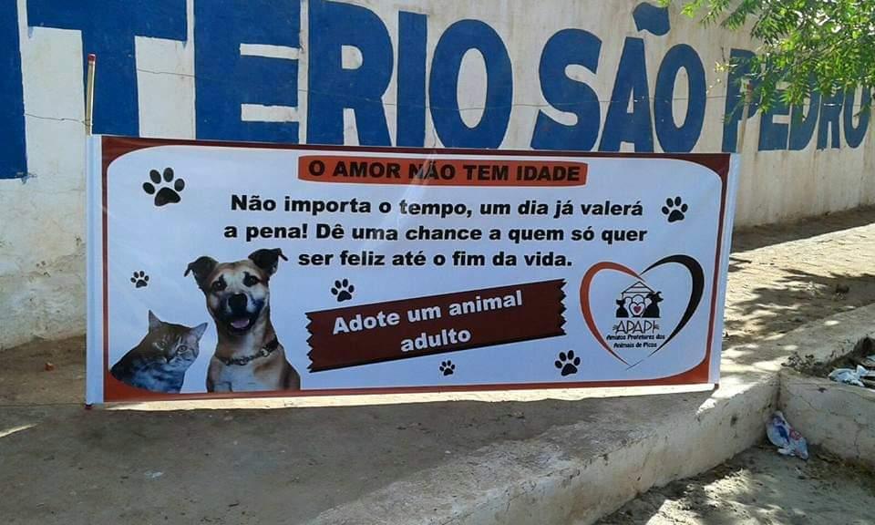 APAPI promove ação paliativa no controle de natalidade dos felinos que são abandonados em Picos
