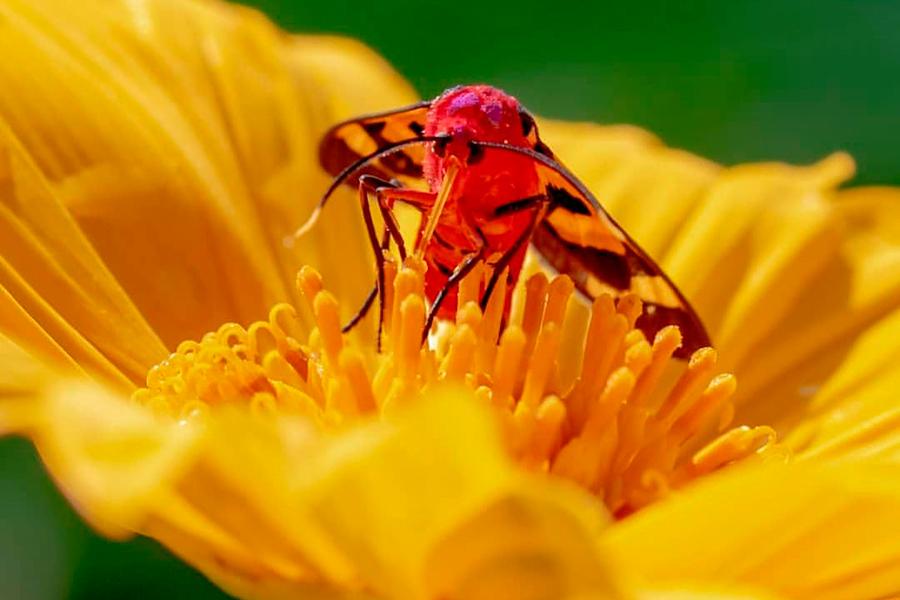 Fotografia: A natureza minúscula de Rosa da Caatinga. Veja fotos!